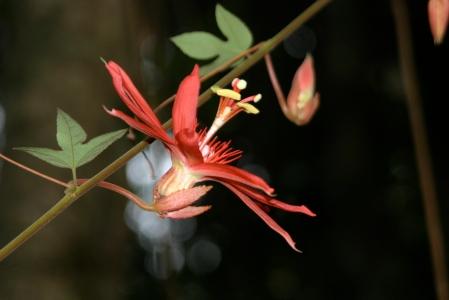 Orquídea en el Parque Metropolitano