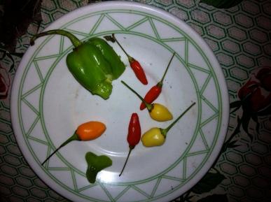 chiles mayas