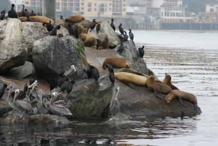 Focas, cormoranes y pelícanos siguen allí 3 horas después