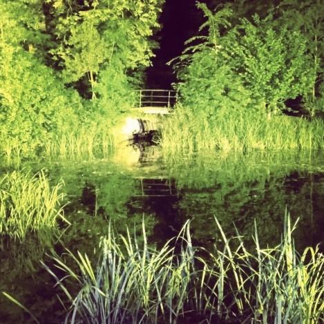 laguna de noche en el botánico