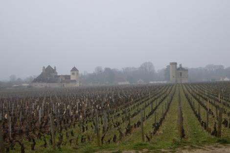 viñedos borgoña