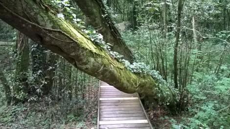 bosque y camino en el botánico