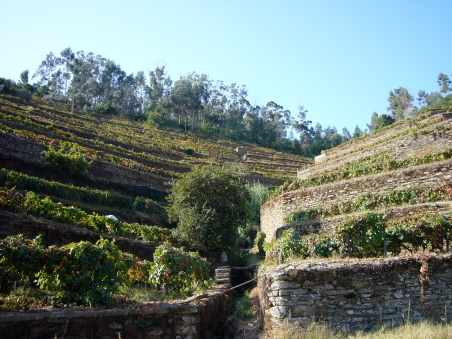 Terrazas de viñedos