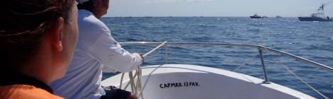 navegando en busca del tiburón ballena