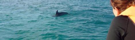 avistamiento de delfines en libertad