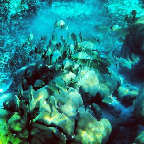 Nadar en Hol Chan es como nadar en una pecera ¡una pasada!