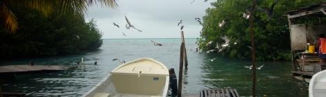 Donde hay pájaros hay pescado. Uno de los muelles de Cayo Caulker