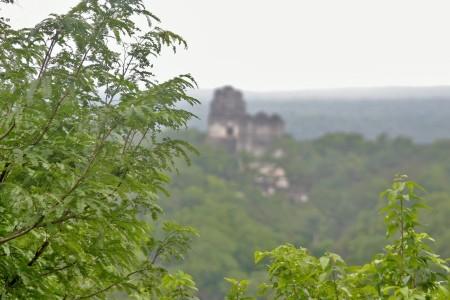 Tikal, una ciudad maya abandonada hace 12 siglos y que permaneció oculta en la selva hasta mediados del s.XIX