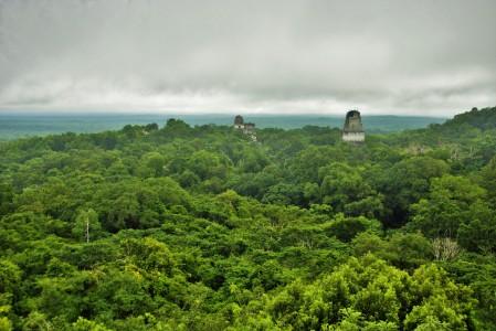 Vistas desde la cima del templo IV. En el centro de la imagen los dos templos de la Gran Plaza. A la derecha el templo V