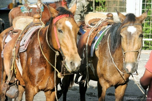 Caballos preparados para la ascensión al Pacaya