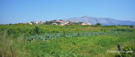 Viñedos de Lumbarda en la isla de Korcula (Croacia)